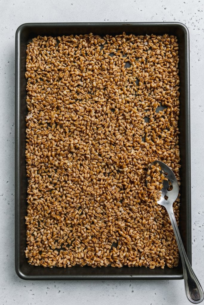 overhead photo of cooked farro spread out onto a baking sheet for drying